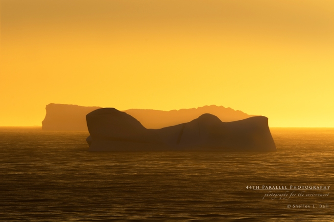 Icebergs at Sunset in the Labrador Sea. © Shelley L. Ball