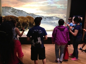 Students look into a diorama of muskox in the high arctic.